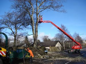 tree surgeouns removing dangerous tree west lothian